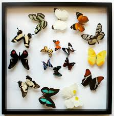 Butterfly Art And Pictures For Home Decor Memorial Day Sale On Real Framed