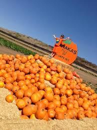 Tanaka Farms Pumpkin Patch by Orange County Mom Blog Tanaka Farms Pumpkin Patch