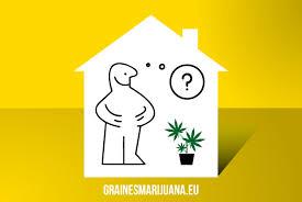 refroidir chambre de culture importants pour la culture du cannabis en interieur