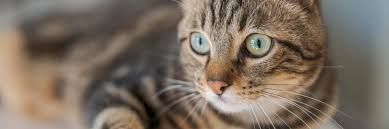 how to spot when your cat s bad breath is a sign of