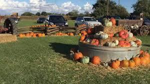 Daves Pumpkin Patch by Keema U0027s Pumpkin Farm Youtube