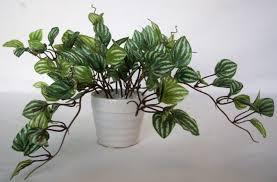 Fake Plants For The Bathroom by Bathroom Artificial Plants Bathroom Trends 2017 2018