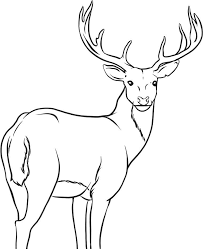 Baby Deer Coloring Page Home