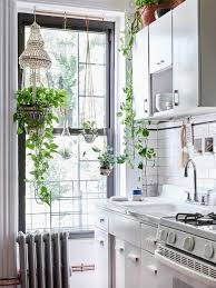 Kitchen With Indoor Plants Photo Eve Wilson Production Lucy Feagins The Design Files