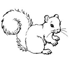 Grey Squirrel Coloring Page From Squirrels Category Select 24228 Printable Crafts Of Cartoons