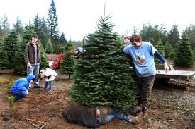 Ready To Get Your Christmas Tree Heres Where Go In And Around Olympia