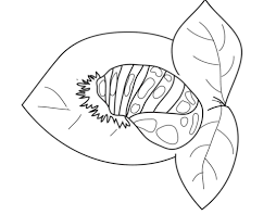 Image Of Coloring Pages Ladybug