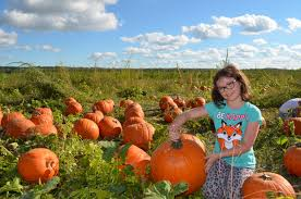 Johnson Farms Pumpkin Patch by Visiting Carolyn U0027s Country Cousins Pumpkin Patch All About