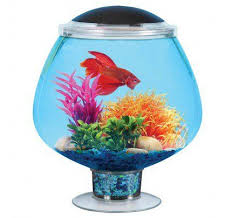 Lava Lamp Fish Tank Walmart by 37 Best Aquariums Terrariums U0026 Vivariums Oh My Images On
