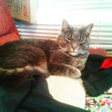Dresser Hill Charlton Ma by Dudley Ma Lost U0026 Found Pets Home Facebook