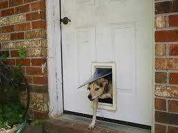 Pet Doors For Patio Screen Doors by Pet Door Wikipedia
