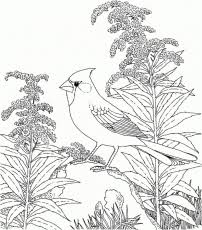 Free Coloring Pages Of Nature Scene Themed Sheets