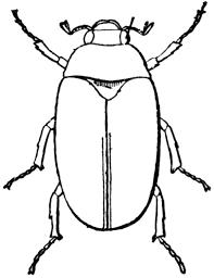 May Beetle