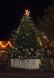 Christmas Tree Shop Warwick Rhode Island by Catchy Collections Of Christmas Tree Warwick Ri Fabulous Homes