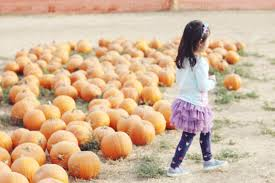 Norms Pumpkin Patch 2015 by Manna For Mommy Day By Day Sustained By Grace Page 4
