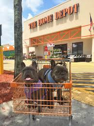 6 Dog Friendly Stores That Allow Dogs