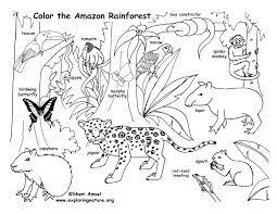 Rainforest Amazon Coloring Page