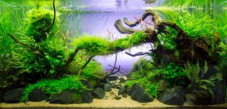 Old River By Sven Pohle - Aquascape Awards | Aquascape | Pinterest ... My Life Story Aquascape Gallery Aquascapes Pinterest Aquascaping Live 2016 Small Planted Tanks The Surreal Submarine World Of Amuse Category Archives Professional Tank Enchanted Forest By Tommy Vestlie Aquarium Design Contest Awards 100 Ideas Aquariums Fish Tanks And Vivarium Avatar Fish Tank Google Search Design Aquascape Ada Aquascaping Contest Homedesignpicturewin Award Wning Amenagementlegocom Legendary Aquarist Takashi Amano Architecture