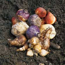 plan before you plant fall bulbs enjoy carefree flowers in