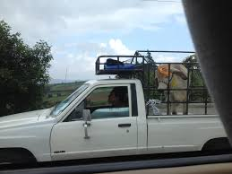 100 Cow Truck Cow In A Truck Imgur