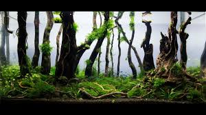 Aquascape Nature Aquarium - Aquascaping - Forest Day 115 - YouTube Aquascape Of The Month June 2015 Himalayan Forest Aquascaping Interesting Driftwood Placement Aquascapes Pinterest About The Greener Side Aquascaping Design Checklist Planted Tank Forum Simons Blog Decoration Bring Nature Inside Home Ideas Downhill By Arie Raditya Aquarium 258232 Aquaria Creating With Earth Water Fire Air Space New Aquascapemarch 13 2016page 14 Page 8 Aquapetzcom Magical Youtube 386 Best Tank Images On Aquascape