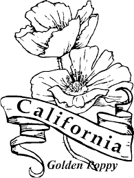 For California State Flower Drawing