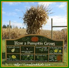 Celina Pumpkin Patch Directions by 186 Best Fun For Kids On The Farm Images On Pinterest Corn Maze