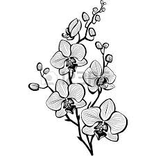 20 025 Orchid Stock Vector Illustration And Royalty Free Orchid