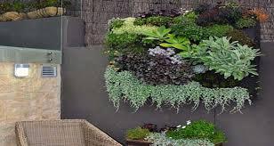 entretien plante grasse d interieur comment planter et entretenir la succulente