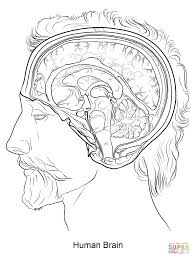 Human Brain Coloring Page In Pages