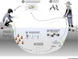 Prospects And Challenges Towards Sustainable Liver Fluke Control