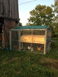 Chicken Coop From A 10x10 Dog Kennel Wrapped In Chicken Wire ... Whosale Custom Logo Large Outdoor Durable Dog Run Kennel Backyard Kennels Suppliers Homestead Supplier Sheds Of Daytona Greenhouses Runs Youtube Amazoncom Lucky Uptown Welded Wire 6hwx4l How High Should My Chicken Run Fence Be Backyard Chickens Ancient Pathways Survival School Llc Diy House Plans Deck Options Refuge Forums Animal Shelters The Barn Raiser In Residential Industrial Fencing Company