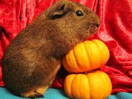 Can Rabbits Eat Pumpkin Seeds by Pumpkin Hutch A Good Life