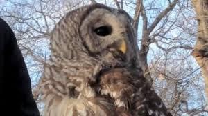 How Owls Swivel Their Heads