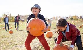 Free Pumpkin Patch In Katy Tx by Pumpkin Patch In Houston Tx Groupon