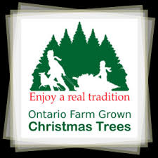 Christmas Tree Types Canada by Your Guide To Ontario Farm Grown Christmas Trees