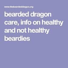 Bearded Dragon Heat Lamp Timer by The 25 Best Bearded Dragon Lighting Ideas On Pinterest Reptile