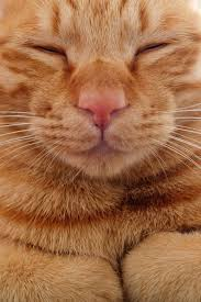 kitty cat what a handsome kitty cats orange tabby kitty cat books