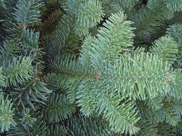 Noble Fir Artificial Christmas Tree by Noble Fir Bough Christmas Tree House