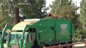 100 Garbage Trucks In Action Trucks 6abccom