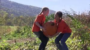 Pumpkin Picking Nj Corn Maze by The Great Pumpkin Festival At Heaven Hill Farm In Vernon Nj Youtube