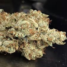Northern Jack Strain Review Nugs Marijuana Blog