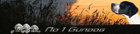 Field Springer Spaniel Shedding by Springer Spaniel No1 Gundog