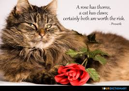 cat quotes a has thorns a cat has claws certainly both are wort