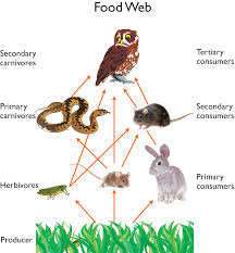 Owl Food Web | Food Recipe Attracting Barn Owls Natural Rodent Control Gardening Energy Transfer And The Carbon Cycle Worksheet Edplace Tritec Science Learning Community Projects Organisms Roles Loss In Food Chain Ecology Biology Lecture Slides Outreach Materials Owl Original Mixed Media Pating 6x8 Inches Bird Wild Decomposers Worksheets For Kids Archbold Biological Station 14 Images Of Wetland Coloring Pages Diagram 037_13d0568f9211773be9a9d4d89c530b2png