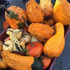 Pumpkin Picking Richmond Hill by Laity Pumpkin Patch Home Facebook