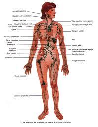 interieur corps humain femme la photo du corps humain