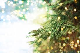 Christmas Trees Types Uk by Real Christmas Trees