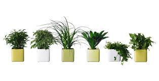 Good Plants For Bathroom by Plant Indoor Plants Suitable For Bathrooms Small House Plants