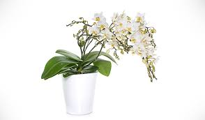 Plants In Bathroom Good For Feng Shui by Top 5 Bathroom Plants And Why You Should Have Them